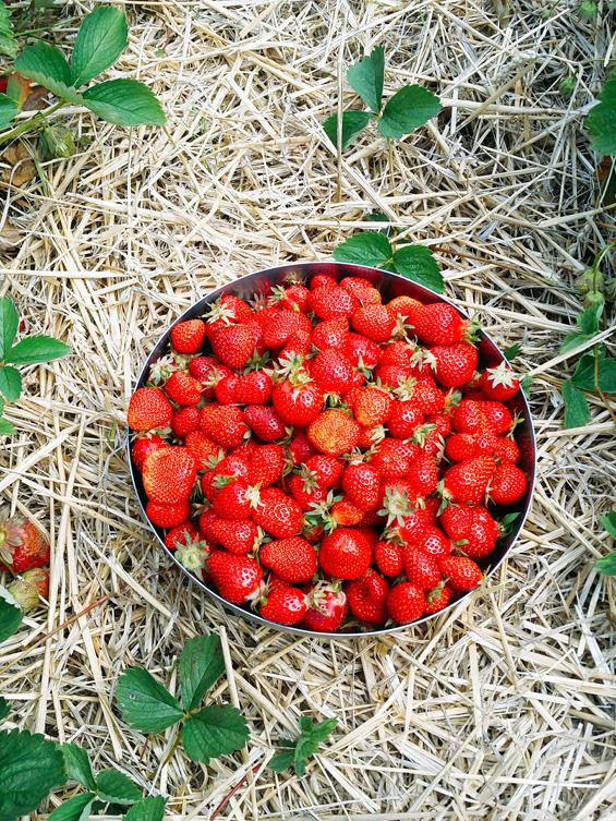 erdbeeren_schale17